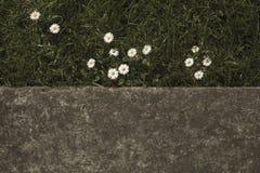 Przyrodnia natura w mieście fotografia stock