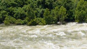 Przyrodnia pokojowa gruntowa przyrodnia gwałtowna wodna opis połówka (Dreamstime) Obrazy Stock