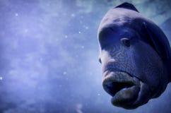 Przyrody Podwodna ryba Obrazy Stock