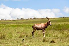 Przyrody samiec krajobraz Fotografia Stock