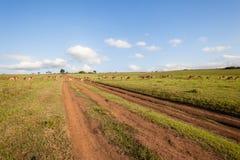Przyrody samiec stada krajobraz Zdjęcie Royalty Free