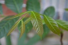 Przyrost drzewa Zdjęcie Stock