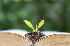 Przyrostowa inteligencja drzewo r obrazy royalty free