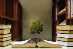 Przyrostowa inteligencja Duży drzewo r zdjęcia stock