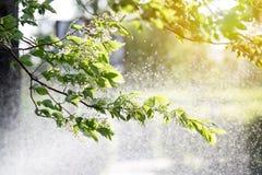 Przyrząd dla nawadniać ogródy i parki obrazy stock