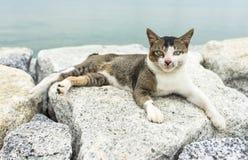 Przysiadły kot Zdjęcie Royalty Free