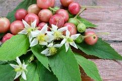 Przyskrzynia drzewa z ich białym liściem na drewnianym tle i florami Fotografia Royalty Free