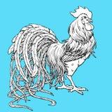 Przystojna kogut kolorystyka na błękicie Zdjęcie Royalty Free