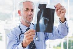 Przystojna lekarka egzamininuje promieniowanie rentgenowskie zdjęcie stock