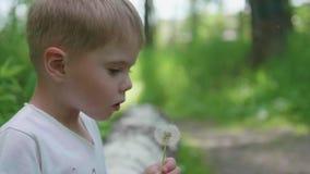 Przystojnej chłopiec dandelion podmuchowi ziarna w parku, zwolnione tempo zdjęcie wideo
