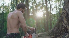 Przystojni brodaci drwala piłowania drzewa z piłą łańcuchową w lesie 4K zbiory