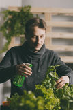 Przystojny hodowca ostrożnie iryguje rośliny salowe fotografia royalty free