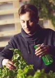 Przystojny hodowca ostrożnie iryguje rośliny salowe fotografia stock