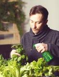 Przystojny hodowca ostrożnie iryguje rośliny salowe obrazy stock