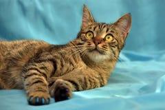 Przystojny młody tabby kot zdjęcie royalty free