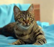 Przystojny młody tabby kot obrazy royalty free