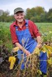 Szczęśliwy rolnik fotografia royalty free