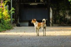 Przystojnych potomstw psi czekanie dla jego szefa iść z powrotem stwarza ognisko domowe w eveni Obraz Stock