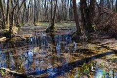 przyszła wiosna dzień lasu krajobraz pogodny Zdjęcia Stock
