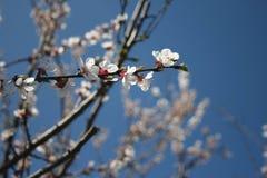 przyszła wiosna Zdjęcie Stock