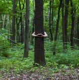 przytulenia drzewo Zakończenie ręki ściska drzewa a Obraz Royalty Free