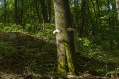 przytulenia drzewo Zakończenie ręki ściska drzewa a Zdjęcia Stock