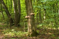 przytulenia drzewo Zakończenie ręki ściska drzewa a Fotografia Stock