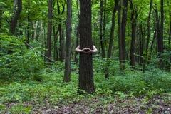 przytulenia drzewo Zakończenie ręki ściska drzewa a Fotografia Royalty Free