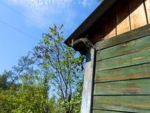 Przytulony szpaczek pod dachem dom Obraz Stock