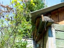 Przytulony szpaczek pod dachem dom Zdjęcia Stock