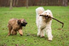 psów bawić się Fotografia Royalty Free