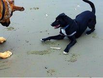 psów bawić się Zdjęcia Royalty Free