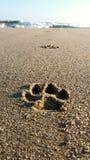 Psów kroki w nadmorski Fotografia Royalty Free