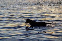 Psów mrozy wokoło wody Obrazy Stock