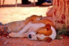 psów target2485_1_ Obrazy Royalty Free
