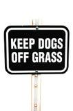 psów trawy utrzymanie Zdjęcia Stock