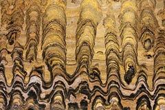 PS de Greysonia stromatolites, période vendienne 650 millions d'années, précambriennes Images libres de droits