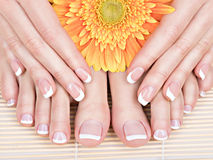 Pés fêmeas no salão de beleza dos termas no procedimento do pedicure e do tratamento de mãos Foto de Stock
