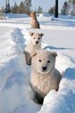 psa bezpański Fotografia Stock