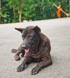psa bezpański Obraz Stock
