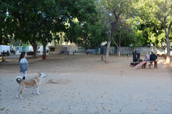 Psa boisko w Meir parku w Tel Aviv, Izrael - Fotografia Royalty Free