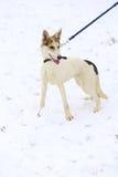 psa grającego w śniegu Zdjęcia Royalty Free