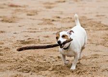 psa grającego w obraz royalty free