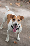 psa grającego w Fotografia Stock
