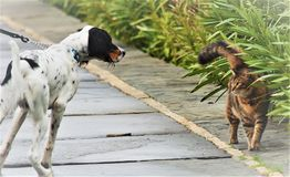Psa & kota ` oko Przyglądać się ` Obrazy Stock