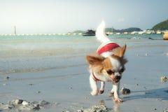psa na plaży grać fotografia stock
