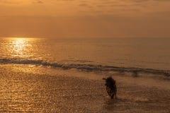 psa na plaży grać Zdjęcia Stock