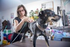 Psa odzieżowy pomiar Zdjęcia Stock