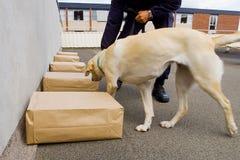 Psa policyjnego pies Zdjęcie Stock