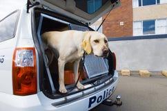 Psa policyjnego pies Fotografia Royalty Free